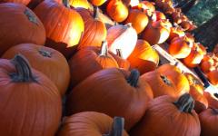 Fun Festivities to do in Fall