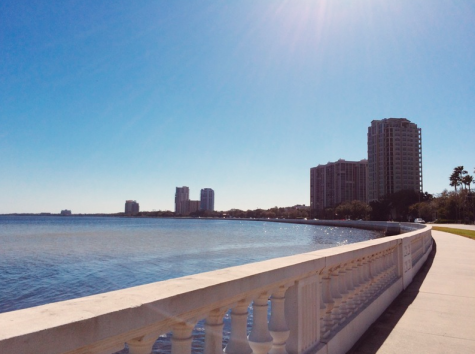 Junior, Anna Padron, captured this photo while walking on Bayshore one afternoon.