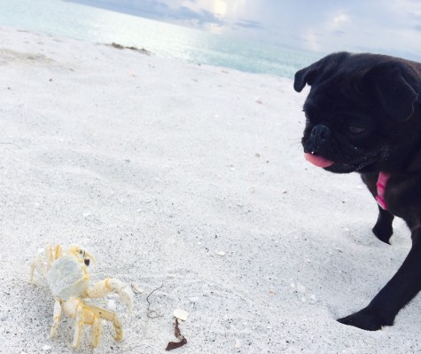 """My dog's favorite thing to do at the beach is chase crabs."" -Claire Obeck"