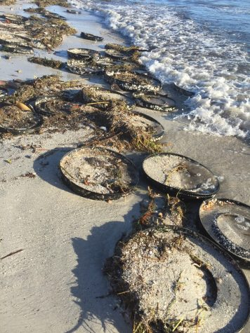 Victoria Wehling snapped a photo of all the debris that Tropical Storm Hermine washed up on the beach.