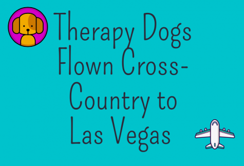 Therapy Dogs Flown Across the Country to Las Vegas