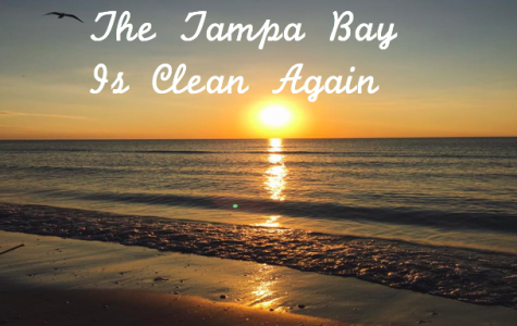 The Tampa Bay Is Clean Again